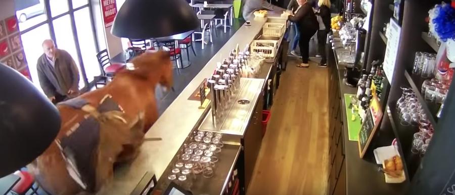Horse Enters Pub