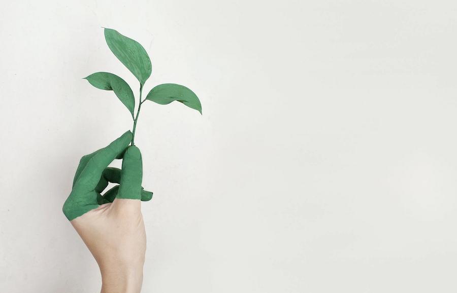 Restaurant Culture - Sustainability